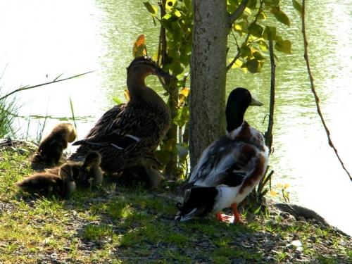 Photos du Domaine Le Jardin Du Marais